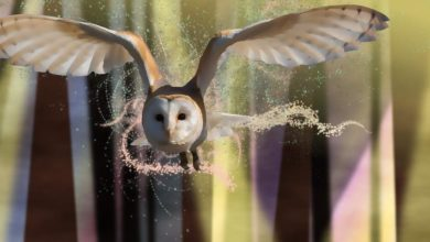 Photo of Harry Potter e la maledizione dell'erede