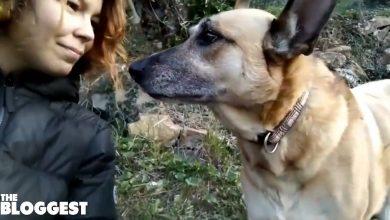 Photo of Cani. Due gravi fatti di cronaca
